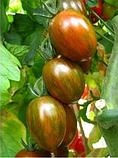 Криспина Плюм 250 шт семена томата тигрового высокорослого Esasem Италия, фото 5