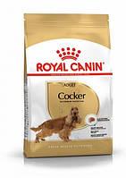 Royal Canin Cocker Adult (Роял Канин) - сухой корм для взрослых собак породы Кокер-спаниель 3 кг