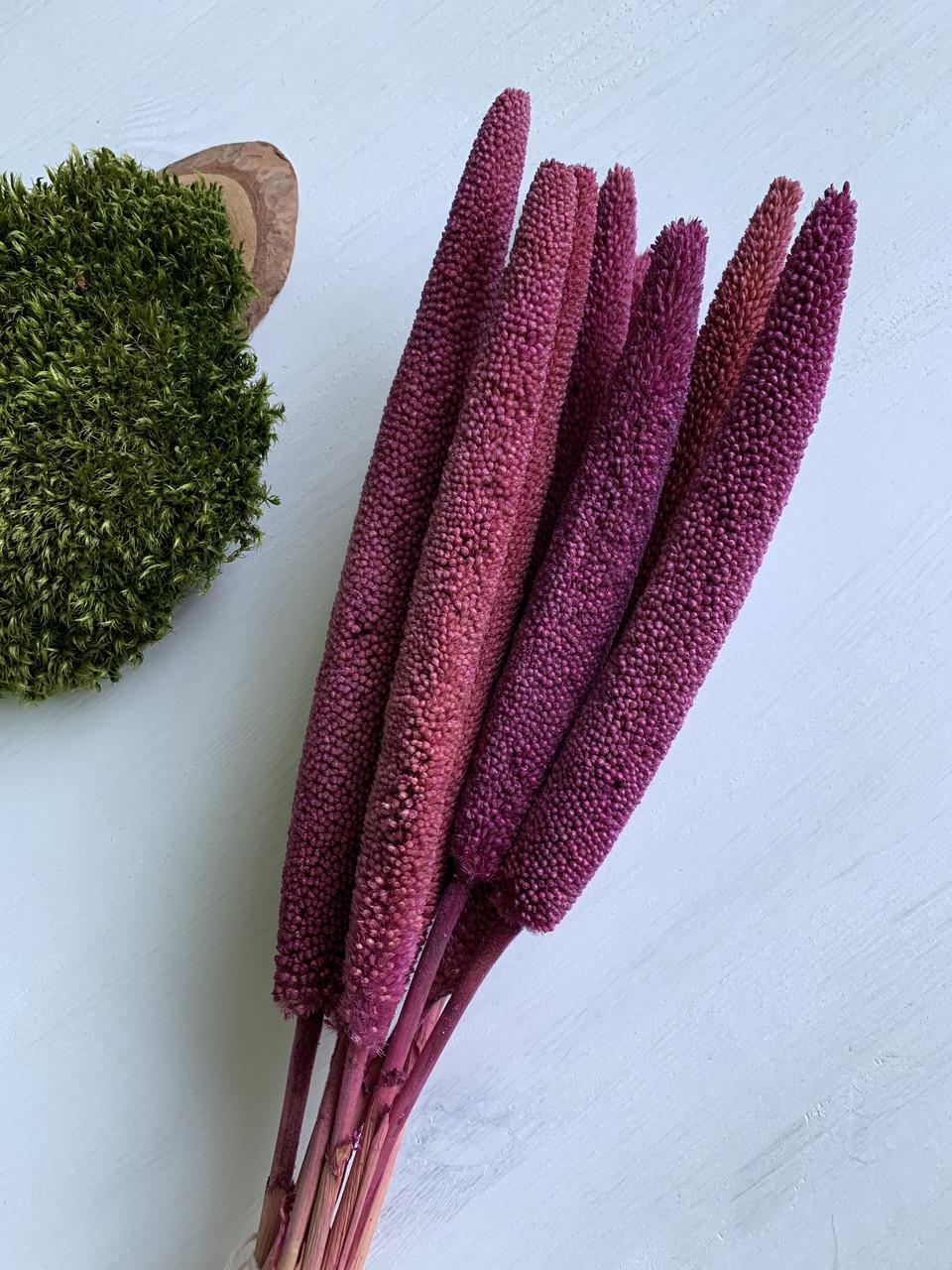 Бабала фиолетовая ( 5 шт )