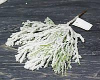 Ветка туи св.зеленой в снегу, фото 1