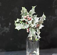 Ветка-дополнитель остролиста с ягодами, фото 1