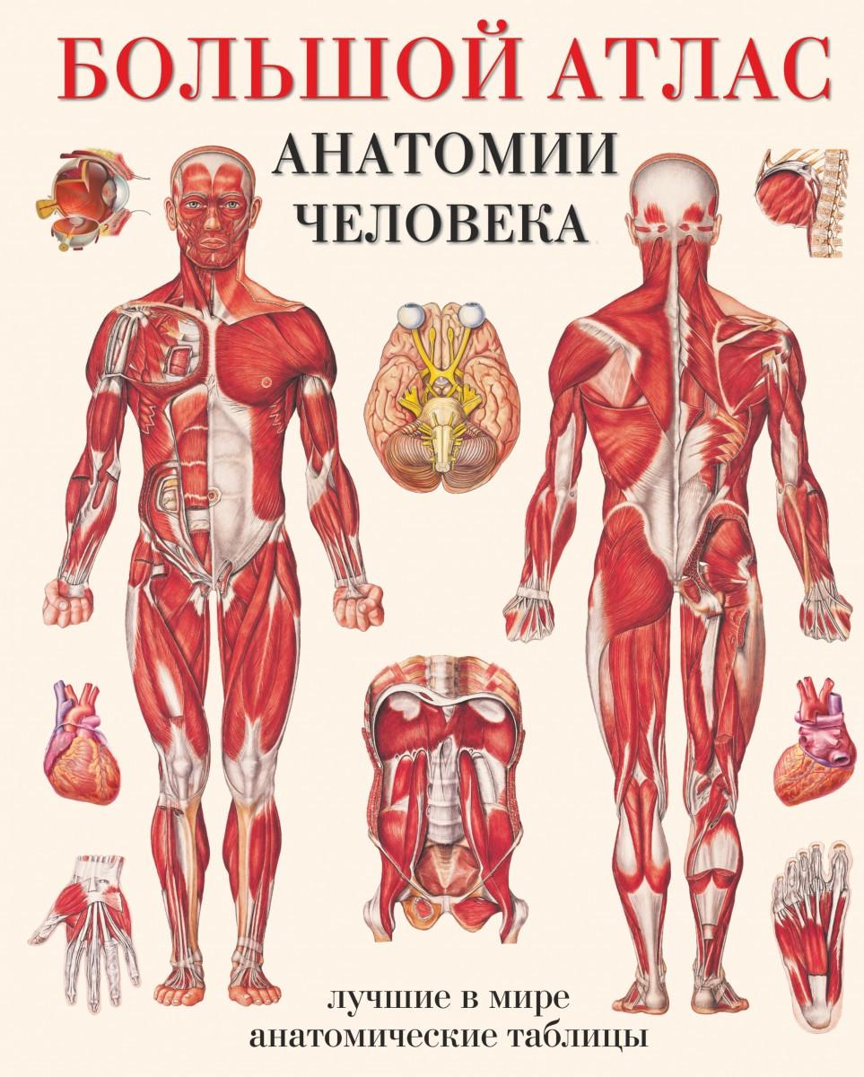 Большой атлас анатомии человека. Махиянова Е.Б.