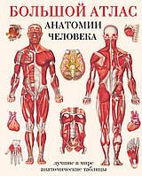 Большой атлас анатомии человека. Махиянова Е.Б., фото 1