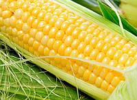 """Насіння цукрової кукурудзи """"Спірит"""" Ф1 (1 кг на вагу з мішка 100 000 нас.)"""