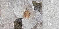 Фотообои виниловые на флизелиновой основе Коралл, экосольвентная