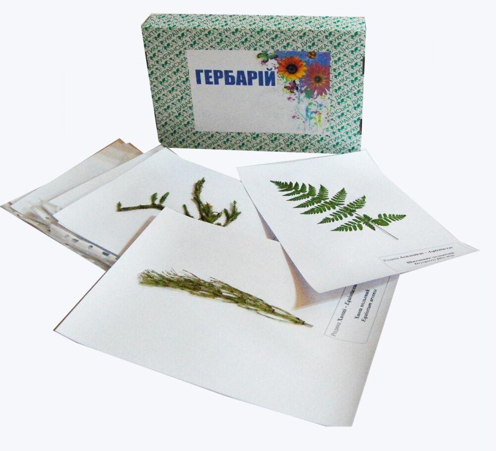 """Гербарій """"Систематика рослин. Вищі спорові та насінні рослини"""""""