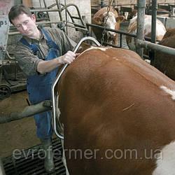 Антибрык для доения агрессивной коровы