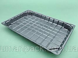 Упаковка пластикова під сушиSL332ВL (224*150*22) (50 шт))