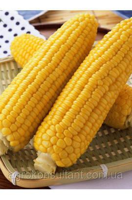 """Насіння цукрової кукурудзи """"Джубілі"""" Ф1"""