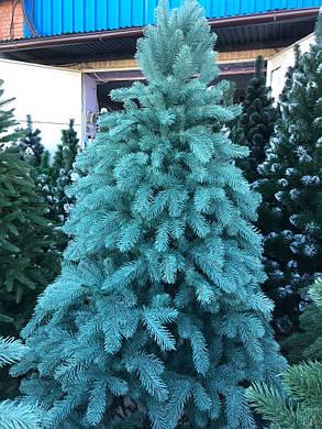 Новогодняя елка литая Ковалевская 1.8 м голубая, фото 2