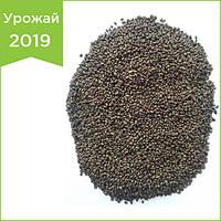 """Семена люцерны """"Надежда"""". Семена магниченные (обработаные). Урожай 2019 года."""