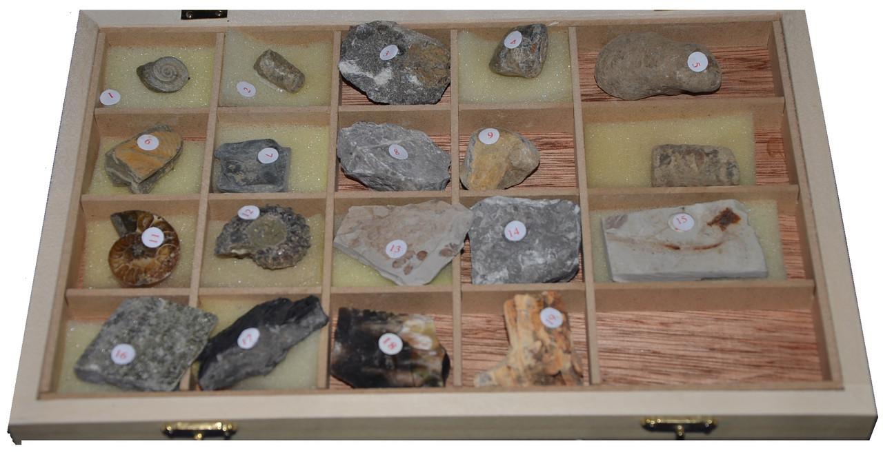 """Колекція """"""""Палеонтологічна (форми збереження викопних решток рослин і тварин)"""""""