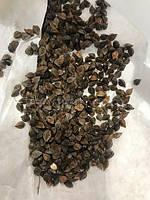 Семена гречки