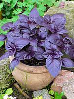 Семена Базилик фиолетовый Ереванский