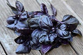 Семена Базилик фиолетовый Бакинский