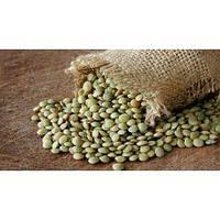 Семена чечевицы зеленой микрозелень
