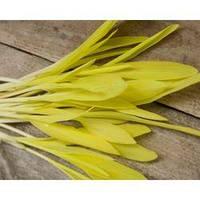 Семена кукурузы сахарной белой микрозелень