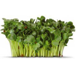 Семена дайкона микрозелень