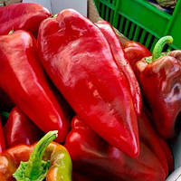 Гибрид сладкого перца Каптур F1, для хранения, приготовления на огне, свежего потребления Seminis 500 семян