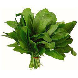 Семена щавеля широколистный микрозелень