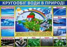 Плакат. Кругообіг води в природі. (680х470 мм.) (СП)