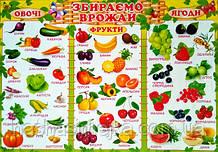 Плакат. Збираємо врожай. (Овочі. Фрукти. Ягоди.) (680х470 мм.) (СП)