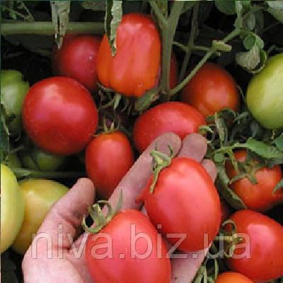 Эскорт семена томата Semo 10 000 семян