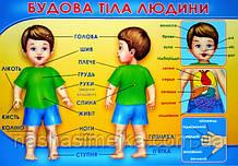 Плакат. Будова тіла людини. (680х470 мм.) (СП)