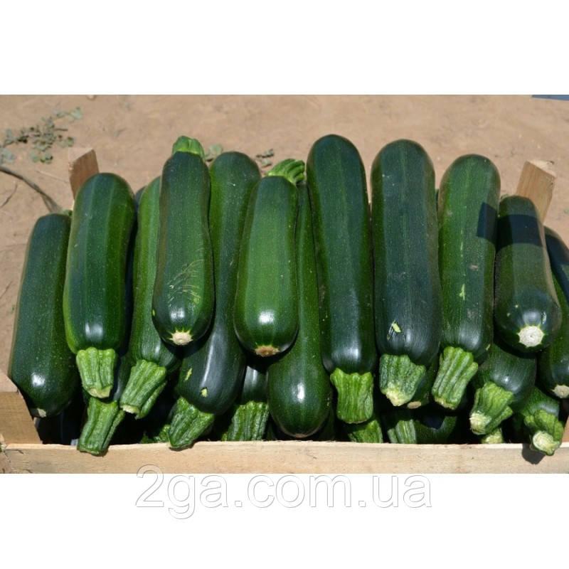 Базальт F1 / Bazalt F1 - Кабачок, Lark Seeds. 500 семян