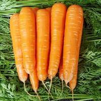 Семена моркови гибридной Матч F1 25000 семян