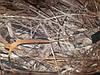 Костюм мужской зимний камуфляж для охоты и рыбалки Камыш 56, фото 2