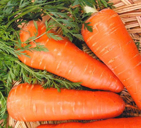 Семена моркови Шантане Роял, Griffaton 500 грамм
