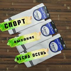 Носки мужские демисезонные высокие белые стрейч SPORT P  41-45р. ассорти  30072019