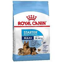 Сухой корм Royal Canin Maxi Starter для щенков крупных пород до 2 месяцев, 1 кг