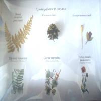 """Колекція """"Ароморфози у рослин"""""""