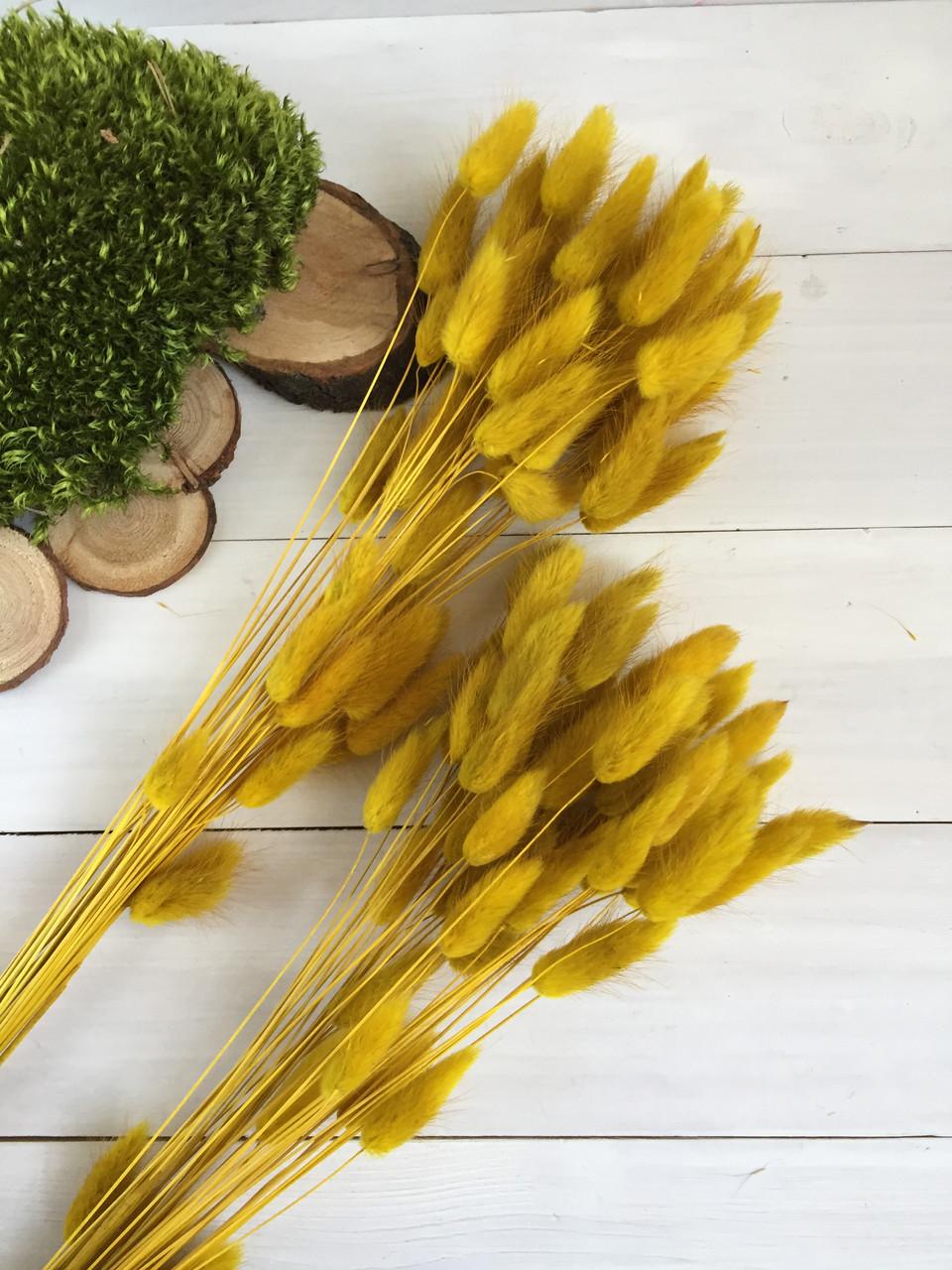 Лагурус тёмно жёлтый ( упаковка 50 шт )