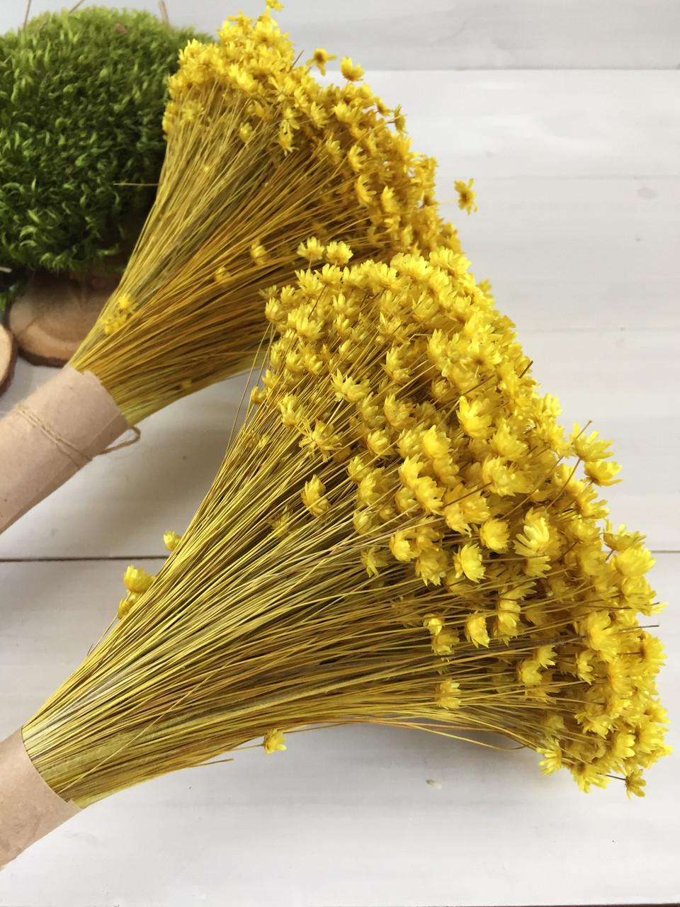 Гликсия жёлтая сухоцвет ( 40 гр )