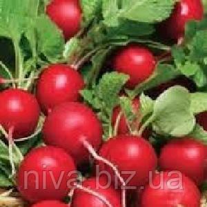 Ранний красный семена редиса  Semenaoptom 1 000 г