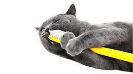 Гигиена ротовой полости котов