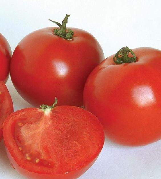 Семена томатов Аполлогет