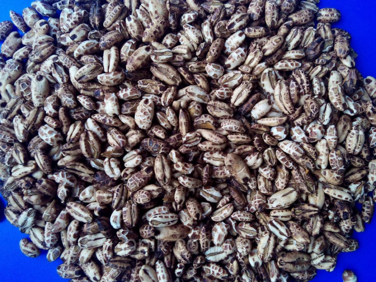 Кофейные зерна (воздушный кукурузный рис) 1 кг