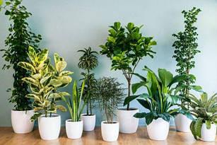 Насіння кімнатних рослин