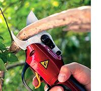 секатор для обрезки веток кустов деревьев, фото