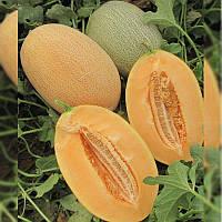Урожайный, среднеранний гибрид дыни Карьера F1 типа ананас, Элитные проф Семена 1000 семян, Nunhems