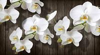Фотообои  Цветы орхидеи   арт. 5010420193