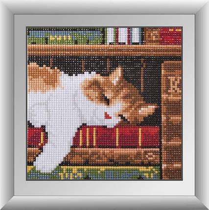 30363м Набор алмазной мозаики Котенок на книжной полке, фото 2