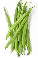 Кустовая спаржевая фасоль сорт Палома Nunhems, Семена овощей профессиональные в крупной фасовке 100 000 семян