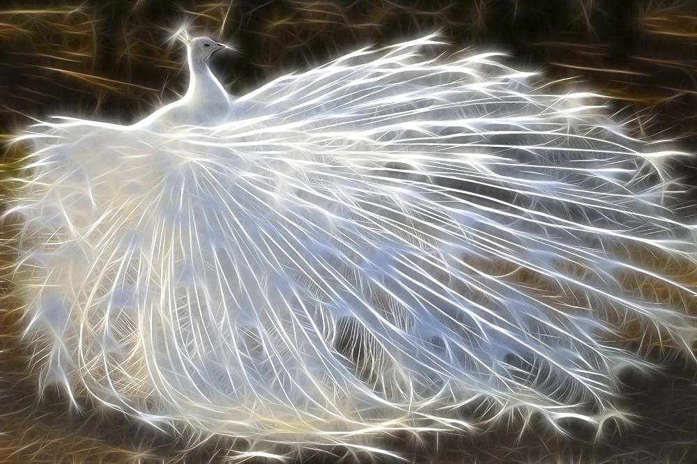 КДИ-0076 Набор алмазной вышивки Символ счастья – Белый павлин