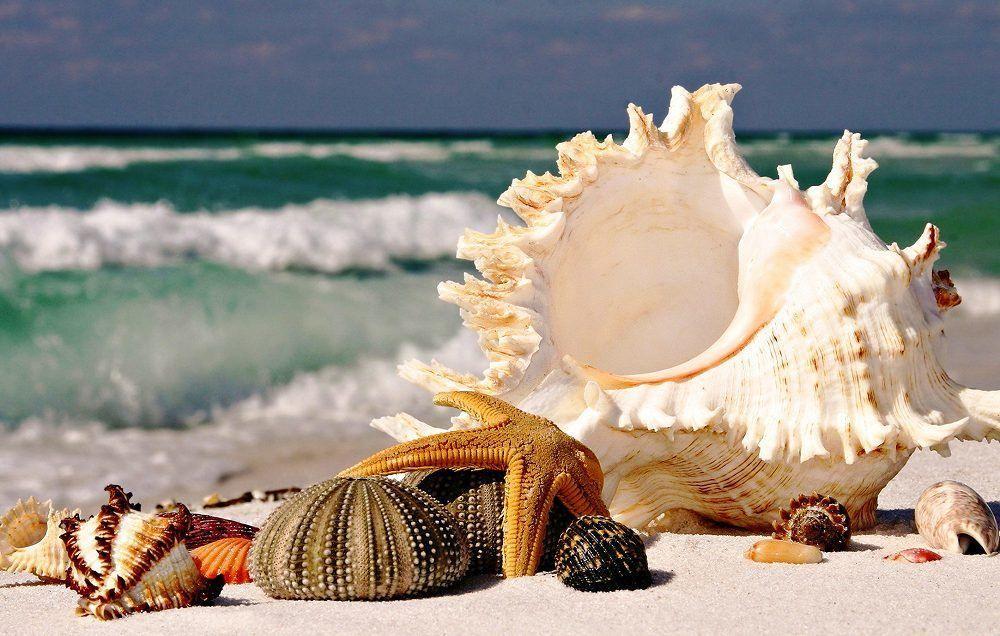 КДИ-0635 Набор алмазной вышивки Дары моря