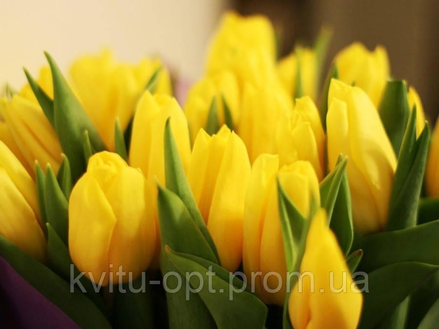 Сток-лист на охлажденные луковицы тюльпанов